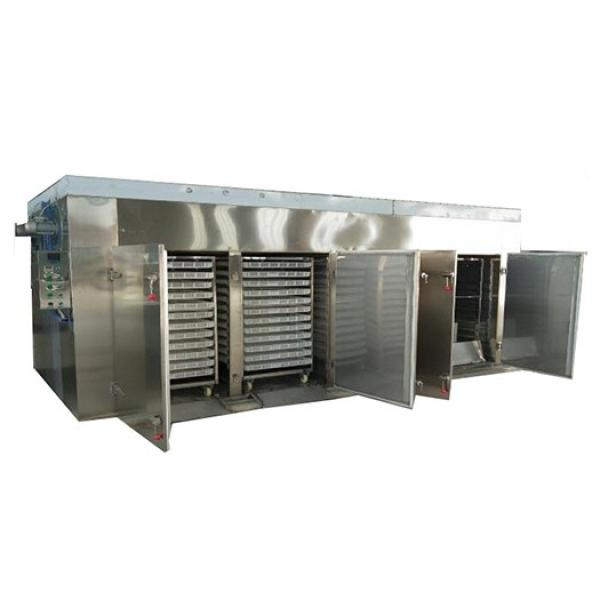 Best Rated Professional Food Dehydrator in Store